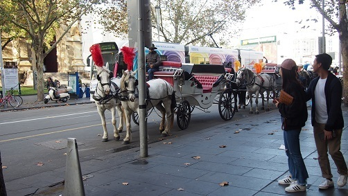 horse-drawn carriages.jpg